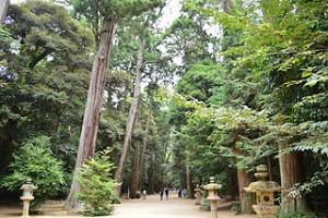 境内の社叢 (茨城県指定天然記念物)