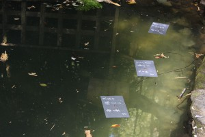 八重垣神社の鏡の池