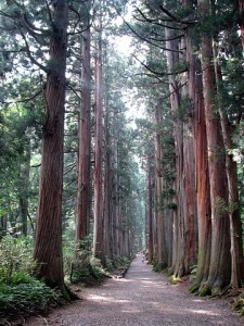 360px-Tree_lined_path_to_the_Togakushi_shrine1