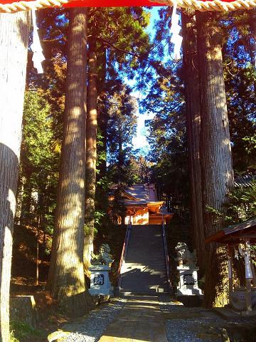 須山浅間神社の御神木