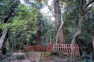 八重垣神社の夫婦杉
